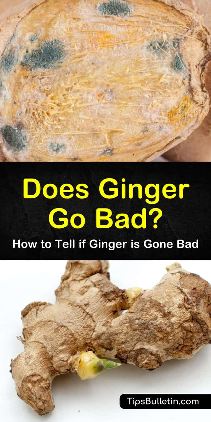 """Answer the question, """"does ginger go bad"""" with these helpful tips for tracking the shelf life of ginger. Discover the best ways to store ginger as well as how to know if it's moldy or not. Try a yummy new recipe using fresh ginger root and honey. #does #ginger #bad"""