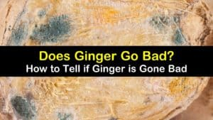 does ginger go bad titleimg1