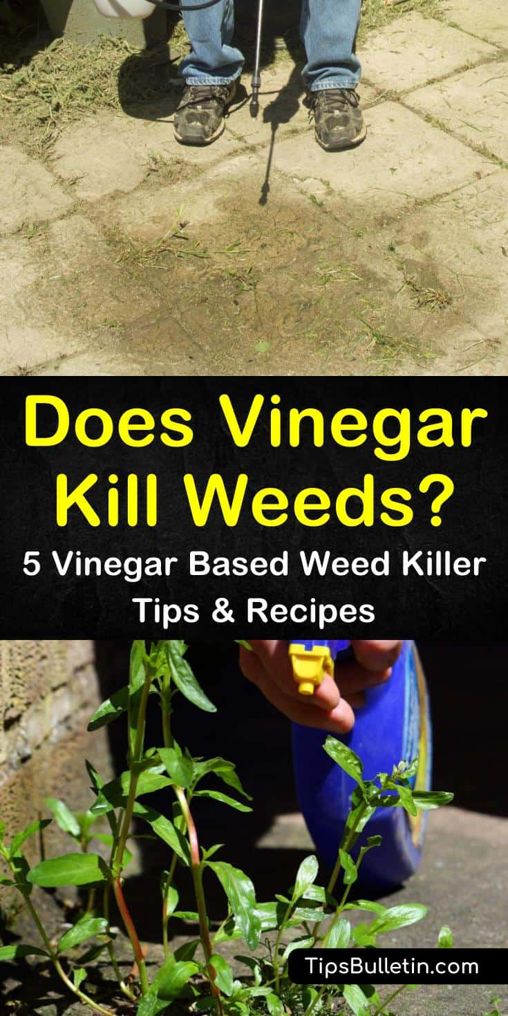 Does vinegar kill weeds for good? If you're looking for an effective weed killer, these amazing recipes will provide you will all the weed control help you need. Use simple ingredients like dish soap, white vinegar, and gin to effectively eliminate weeds. #vinegar #kill #weeds #garden