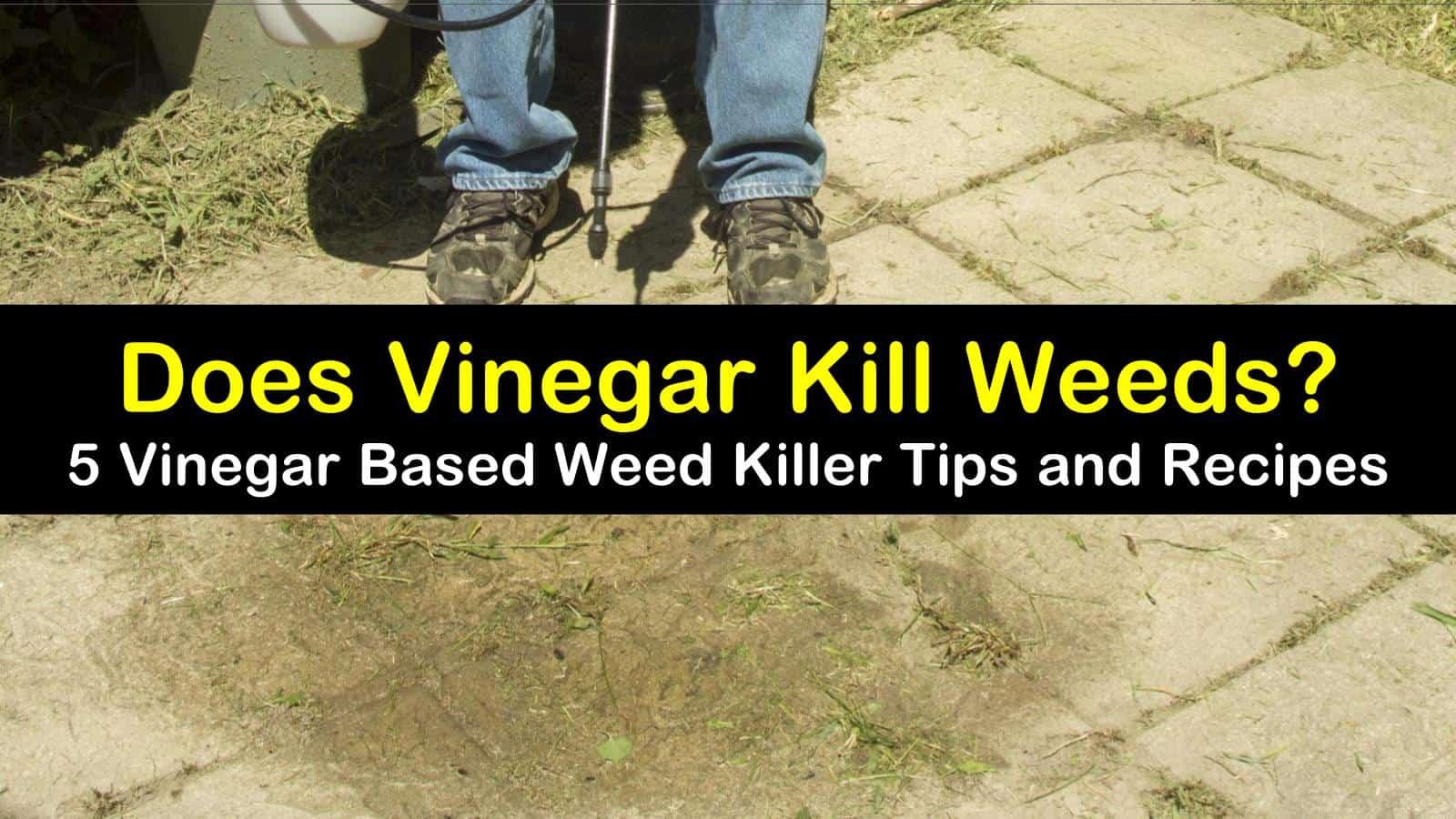 does vinegar kill weeds titleimg1