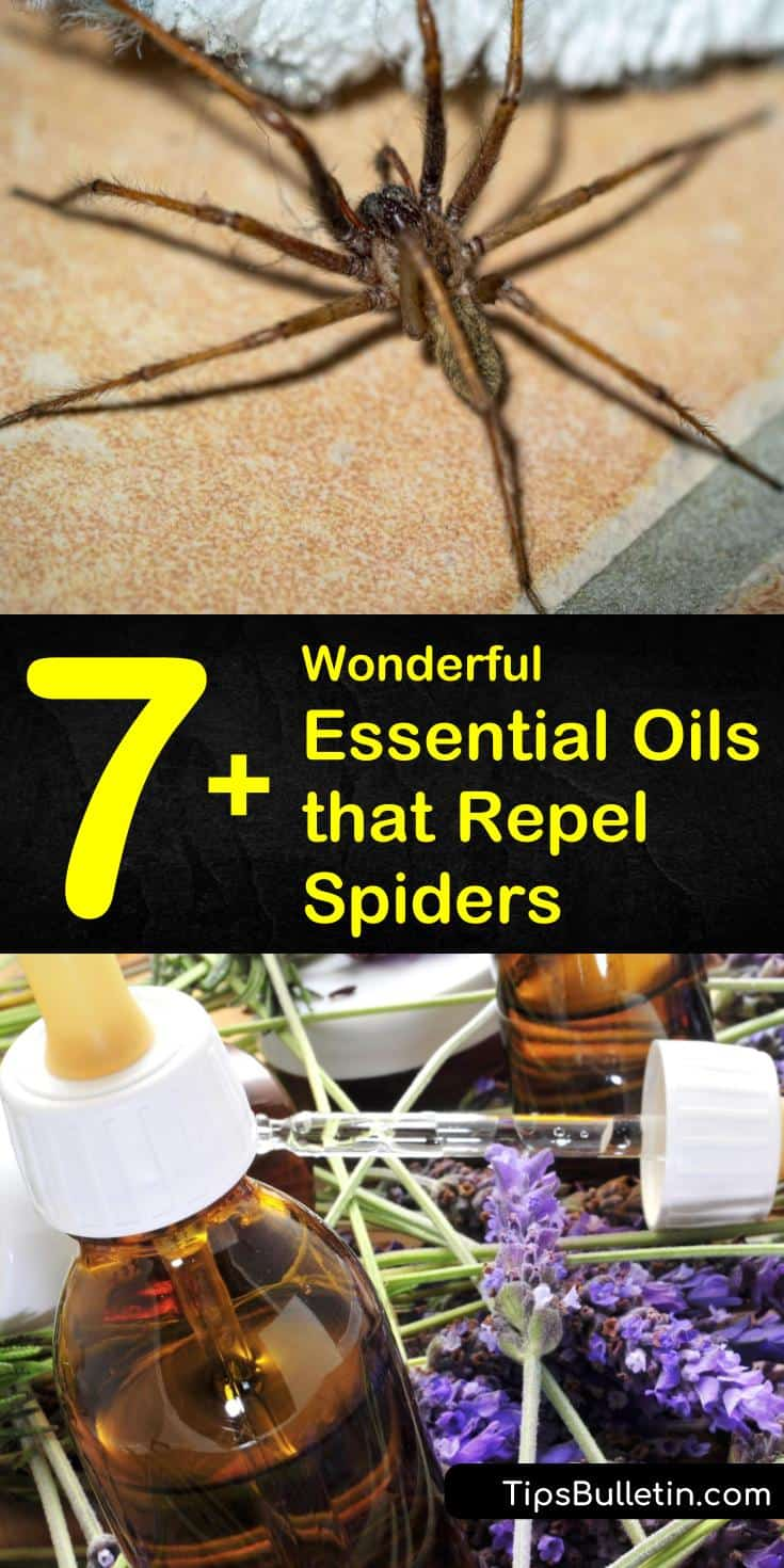 There are several different essential oils you can use to make homemade spider repellant spray. These same oils can also be used to deter many other pests, as well as make your home smell nice. #repelspiders #essentialoils #getridofspiders