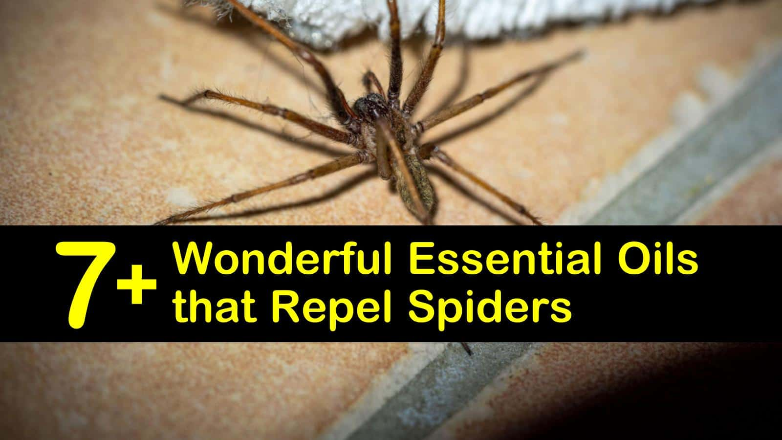 essential oils that repel spiders titleimg1