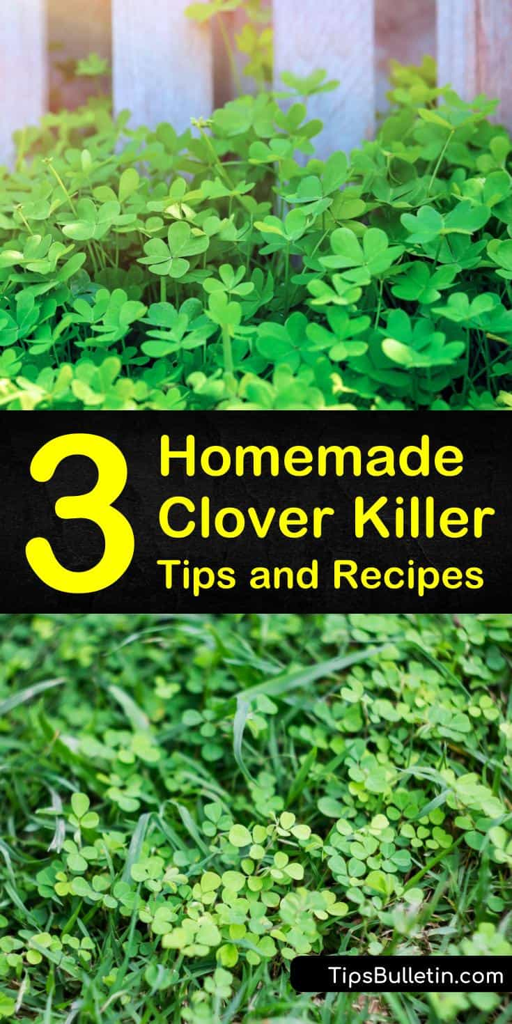 Discover how to maintain a healthy lawn as a form of weed control. We'll also show you how to make homemade white clover weed killer using dish soap and white vinegar, or by using boiling water to eliminate weeds from your lawn. #homemadecloverkiller #cloverkiller #killclover