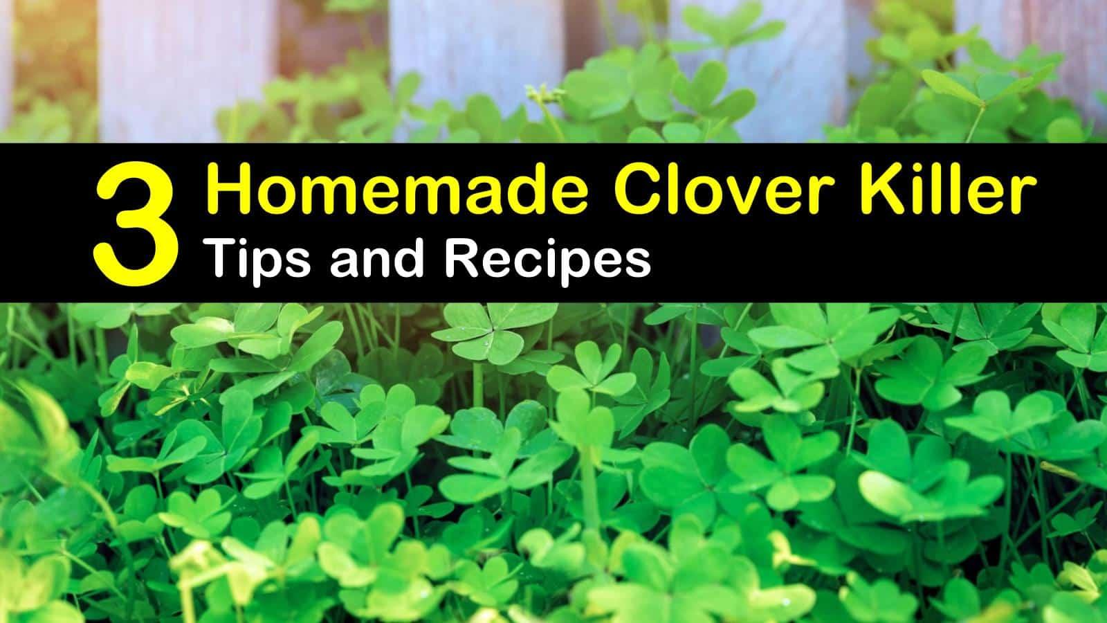 homemade clover killer titleimg1