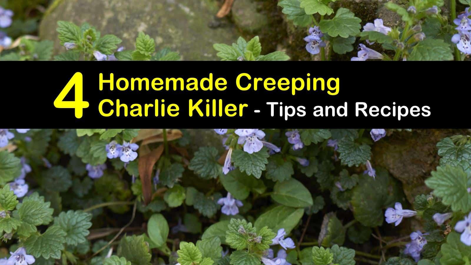 homemade creeping charlie killer titleimg1