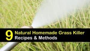 homemade grass killer titleimg1