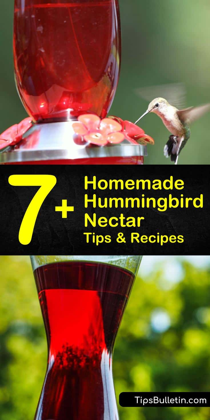 Discover how easy it is to make homemade hummingbird nectar with a few simple ingredients. Make a simple nectar recipe using sugar and water, and learn how to attract hummingbirds to your yard. #hummingbirdnectarrecipe #hummingbirds #hummingbirdfood