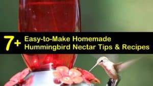 homemade hummingbird nectar recipes titleimg1