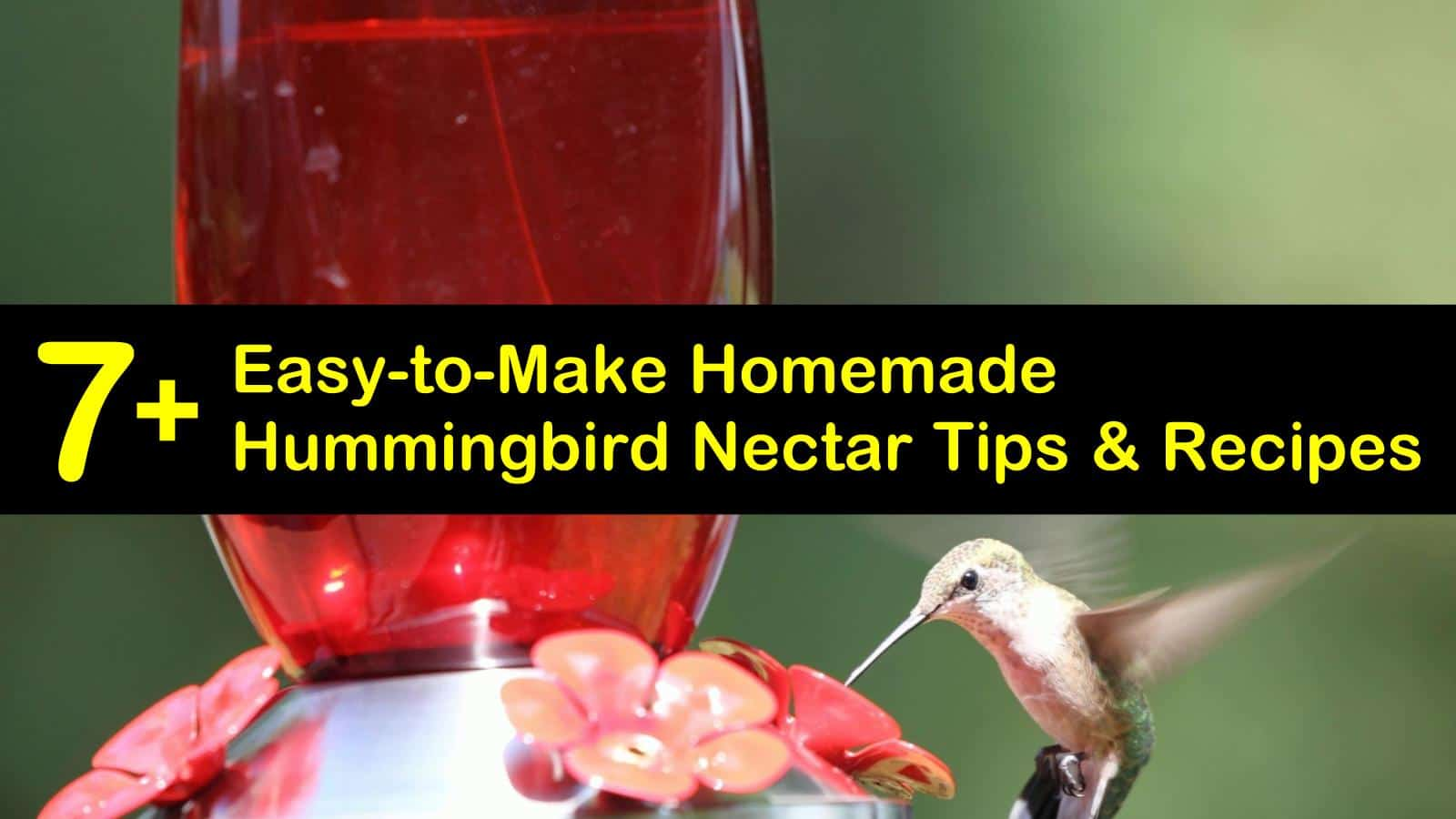 homemade hummingbird nectar recipes titleimg1