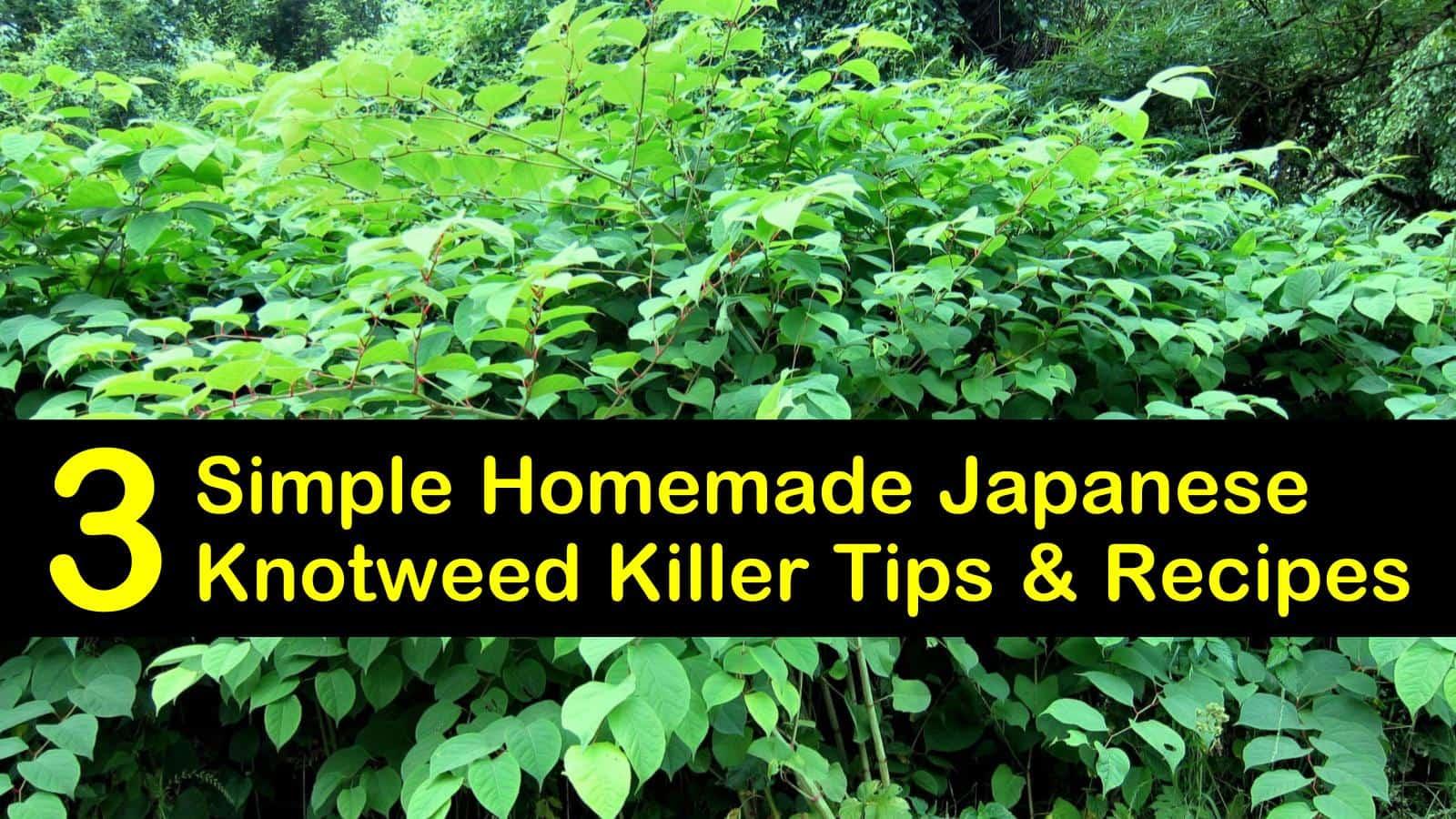 homemade japanese knotweed killer titleimg1