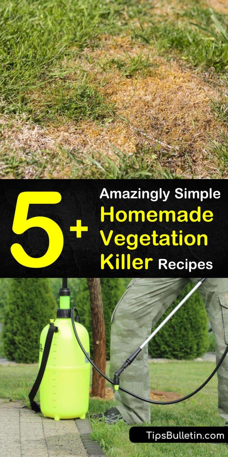 Discover which homemade vegetation killer works best for the weeds in your yard. Create your own DIY moss and weed killer that's safe to use on grass. Learn which preventative measures will keep your lawn healthy long after the unwanted plants are gone. #homemade #vegetation #killer #weeds