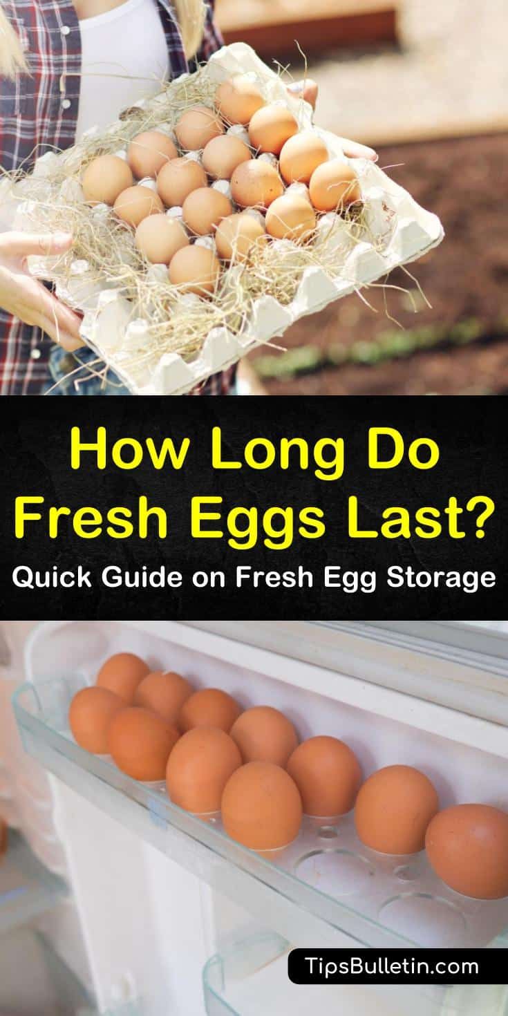 Store fresh eggs, unrefrigerated at room temperature by using a few simple guidelines. Because eggshells are porous, unwashed eggs will stay fresh longer. You can also store those fresh eggs in the fridge for a longer storage time. #eggs #howlongdoeggslast #storeeggs