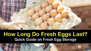 how long do fresh eggs last titleimg1