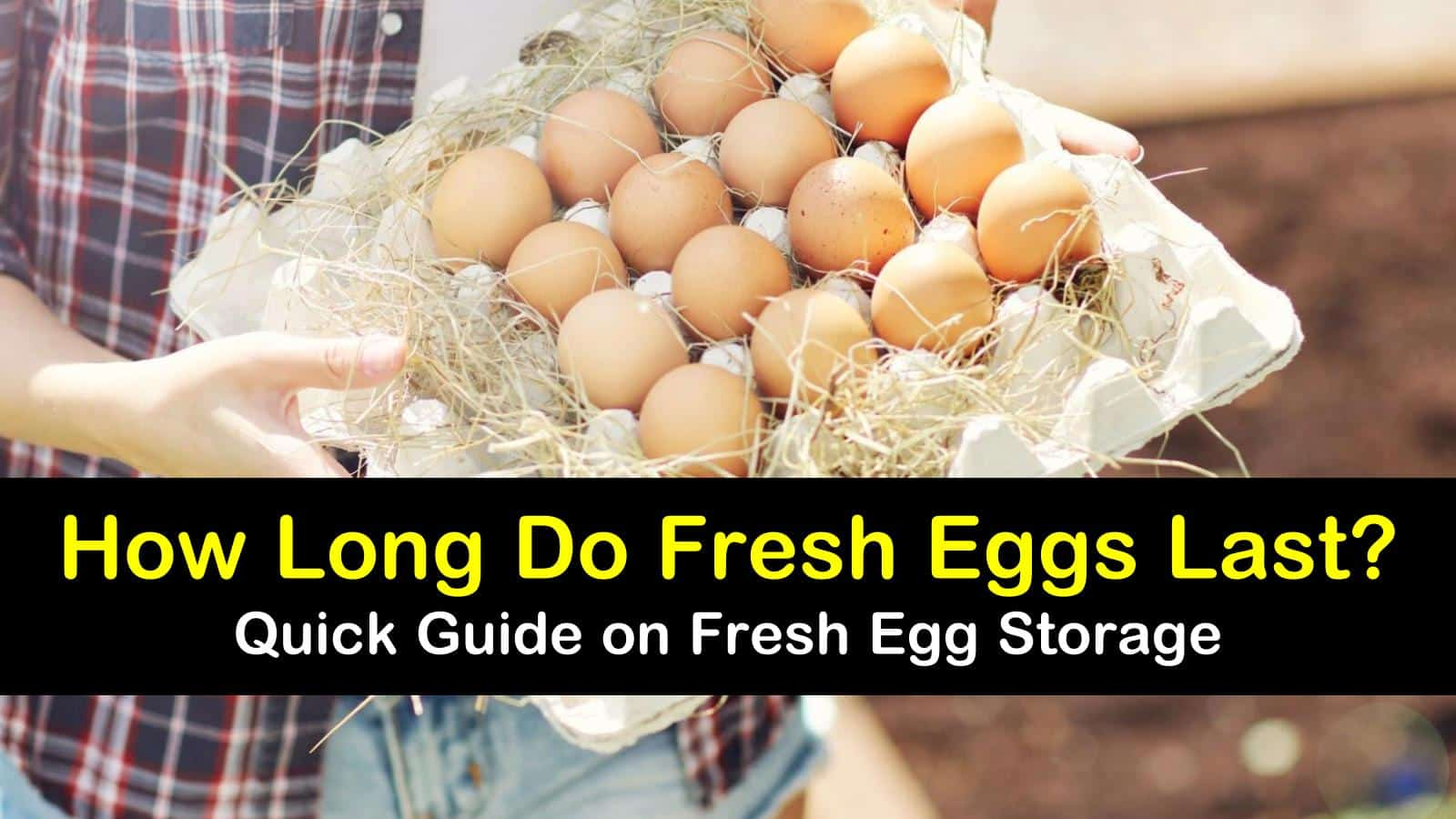 how long do fresh eggs last titleimg1