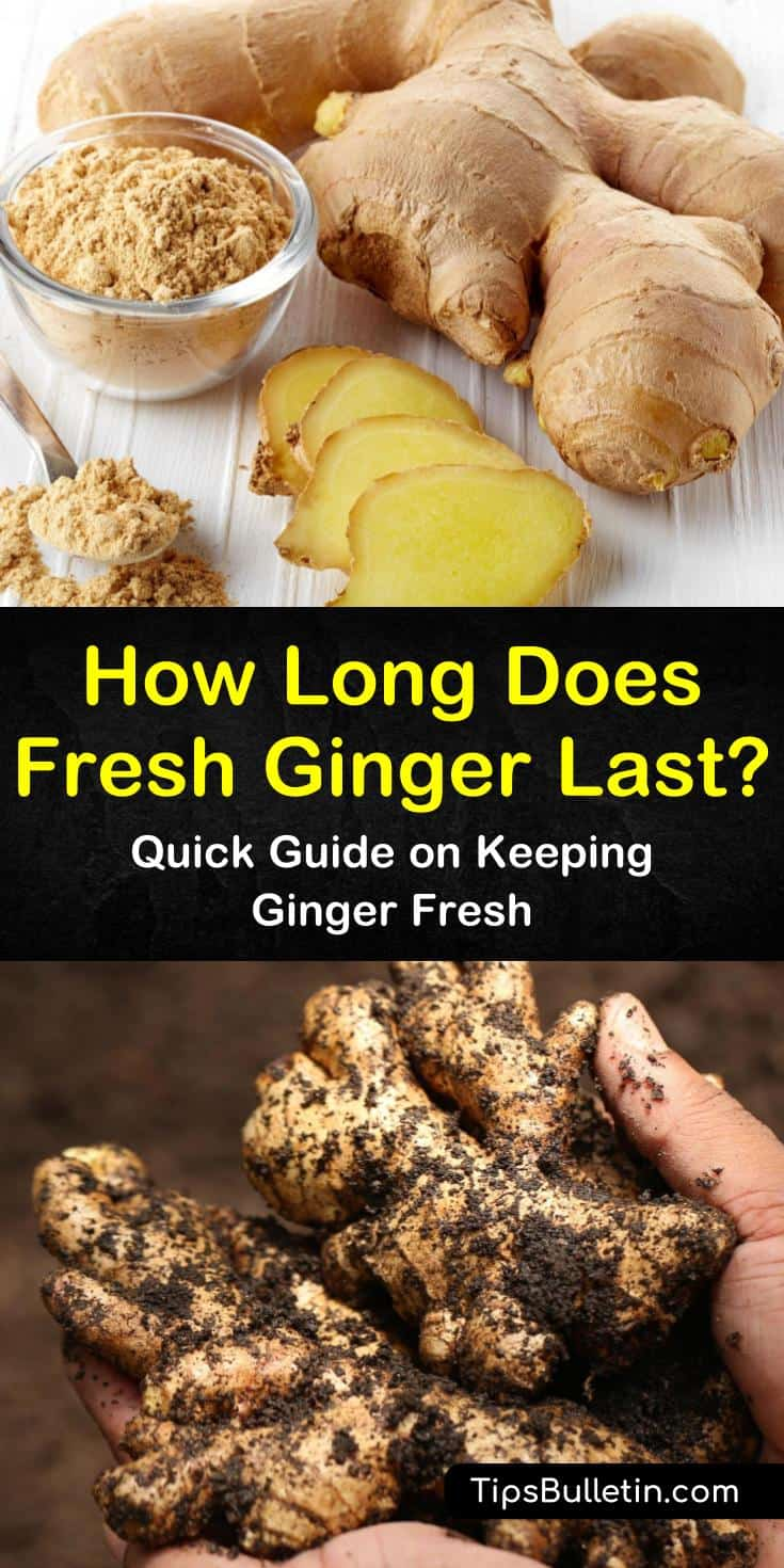 Fresh ginger root does not last long stored in plastic wrap and it could cause it to get moldy. Extend its shelf life by storing it in the pantry, refrigerator, or freezer using one of our time-tested methods. #ginger #keepgingerfresh #freshginger