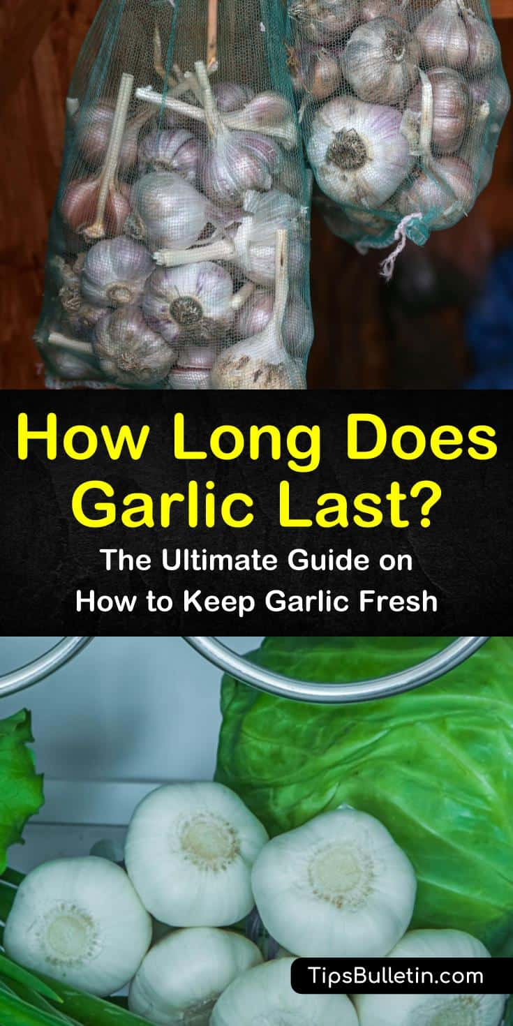 Curious to know how long does garlic last at room temperature, when frozen, or refrigerated? Learn the best ways to store garlic with helpful pickling recipes and how to increase their shelf life with olive oil. You can also try a tasty new way to make garlic bread. #garlic #last #storegarlic