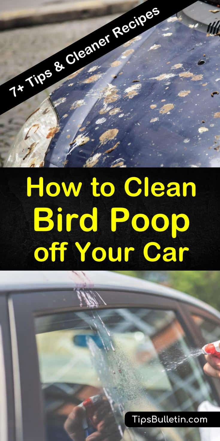 If you park under a tree, you are going to end up with bird droppings on your car. Don't let the bird poop sit there and eat away at your paint. Learn various ways that you can remove it. #birdpoop #birdpooponcar #cleanbirdpoop