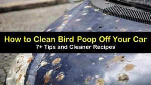 how to clean bird poop off a car titleimg1