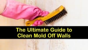 how to clean mold off walls titleimg1
