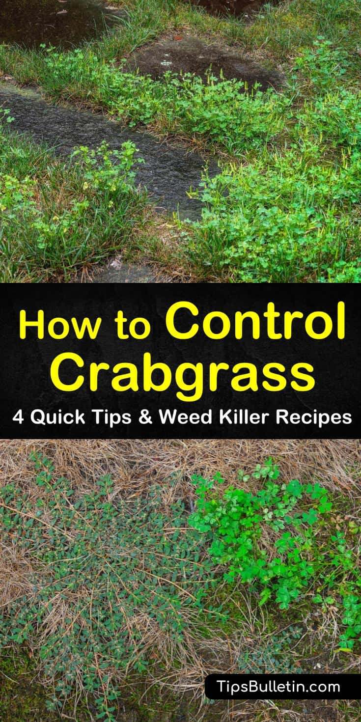 Crabgrass seeds, when left alone, turn into crabgrass plants, which cannot be controlled solely by mowing. Let us show you how easy crabgrass control really easy with a few tips and recipes. #controlcrabgrass #crabgrass #gardening
