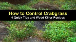 how to control crabgrass titleimg1