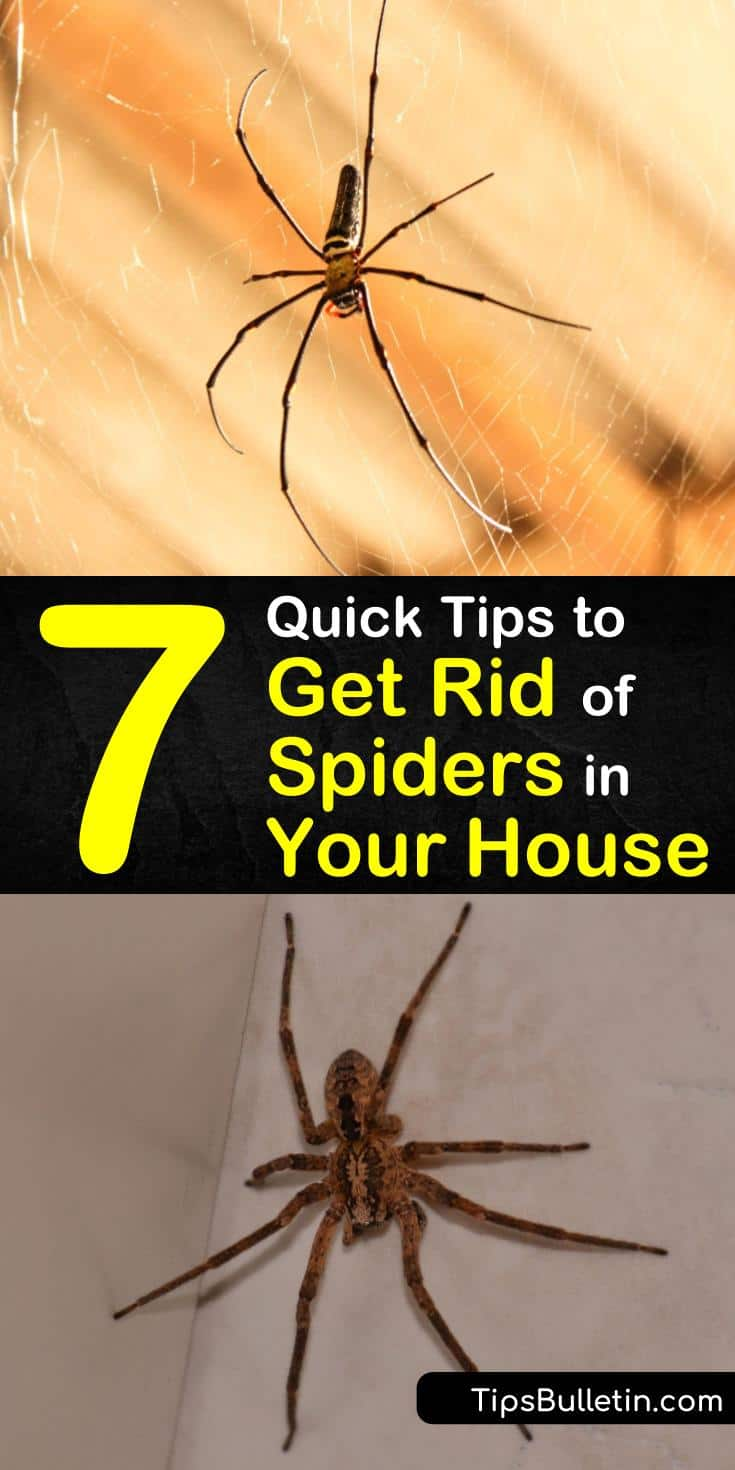 Learn how to keep spiders out of houses by using natural remedies and recipes. Eliminate spiders naturally by making a DIY spider pest control spray using essential oils and white vinegar. #spiders #home #house
