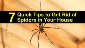 how to get rid of spiders in your house titleimg1