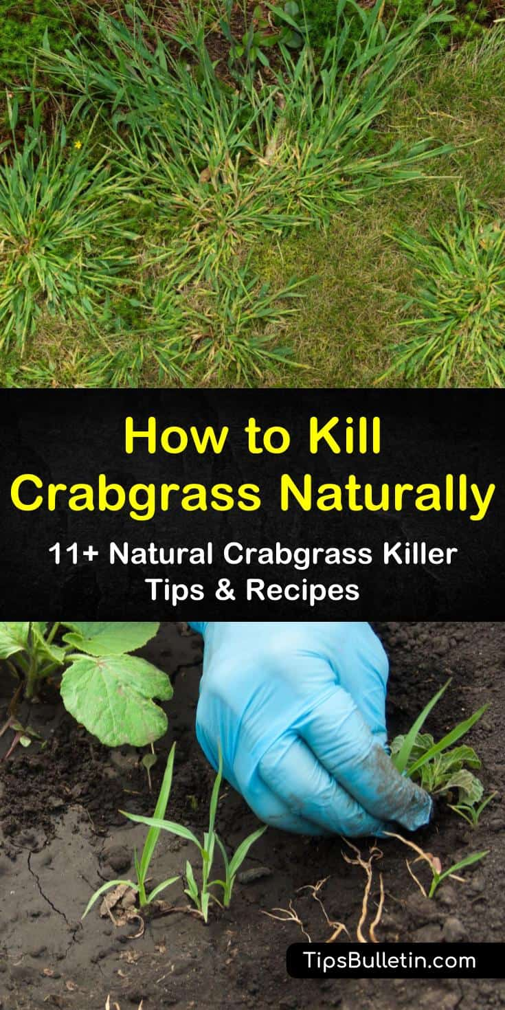 Learn how to kill crabgrass using homemade solutions like vinegar and orange oil. Get rid of crabgrass by mowing your lawn and establishing healthy care routines. Try these preventative measures to keep crabgrass off your lawn from one year to the next. #howto #crabgrass #killcrabgrass