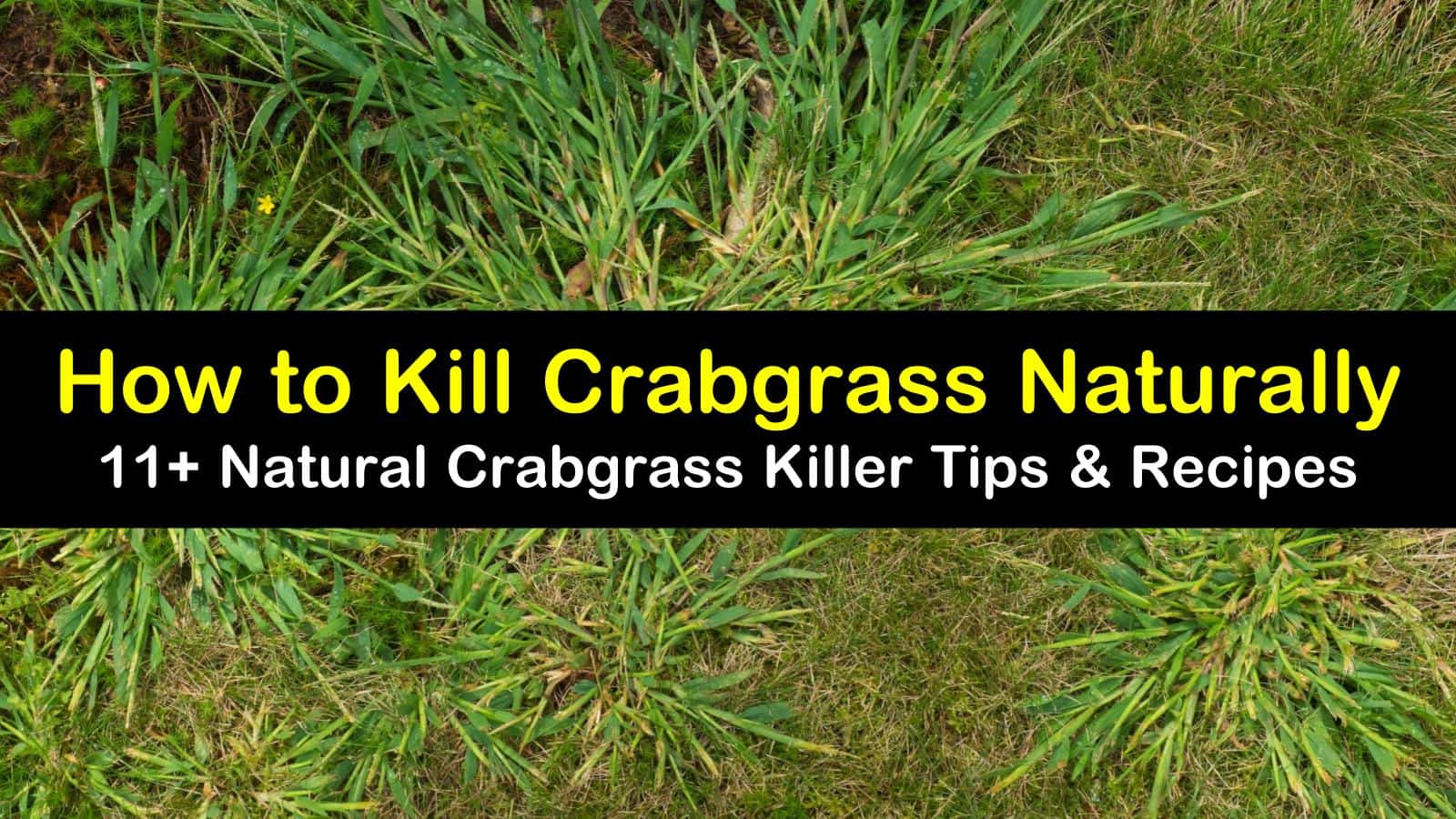 how to kill crabgrass titleimg1
