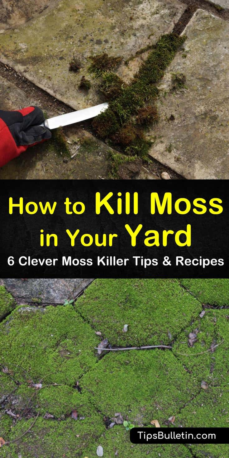 Learn how to kill moss in your lawn by using natural methods. Aerate your lawn and raise the soil pH to prevent moss growth. Remove small patches of moss by using a homemade spray. #killmoss #mosskiller #getridofmoss