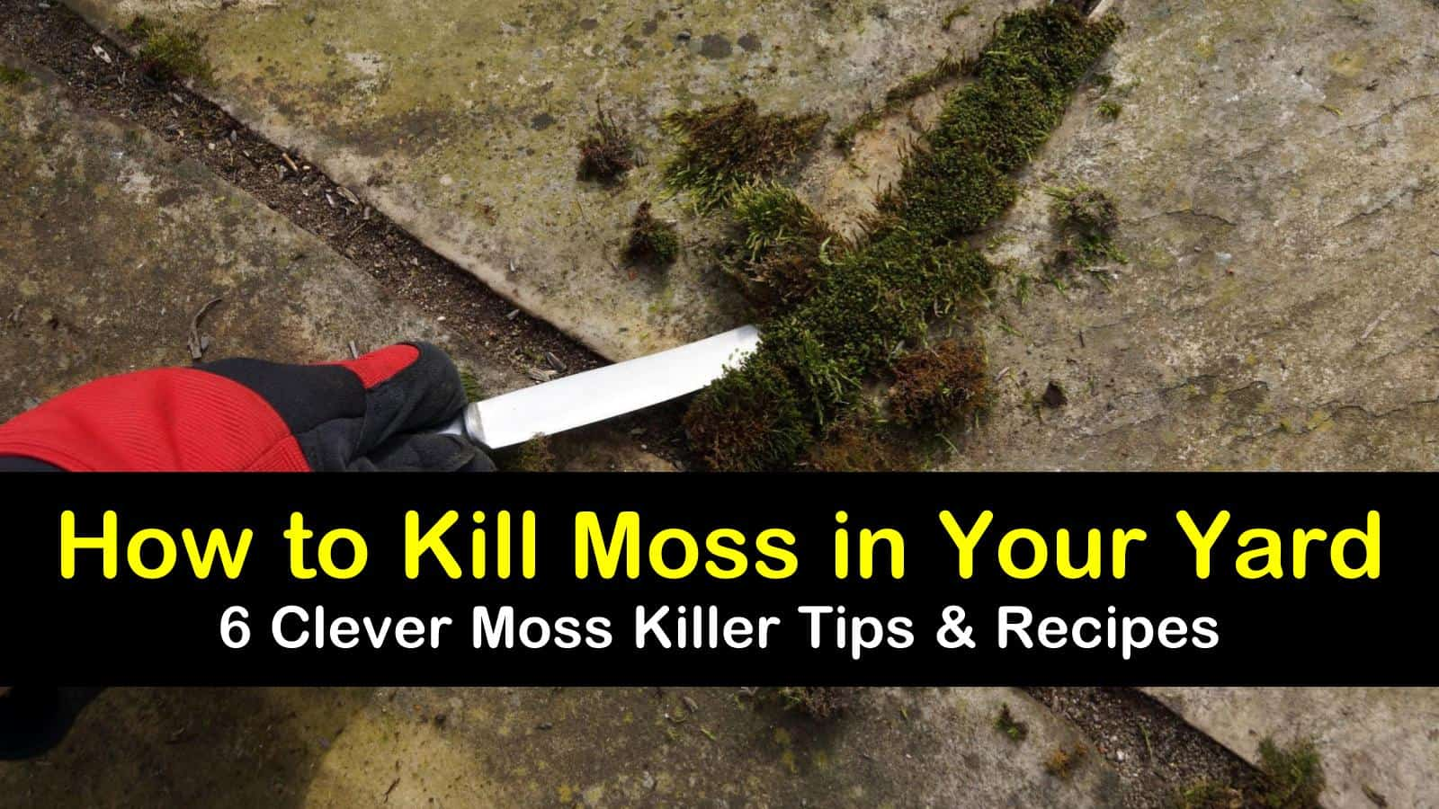how to kill moss in your yard titleimg1