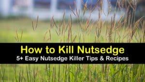 how to kill nutsedge titleimg1