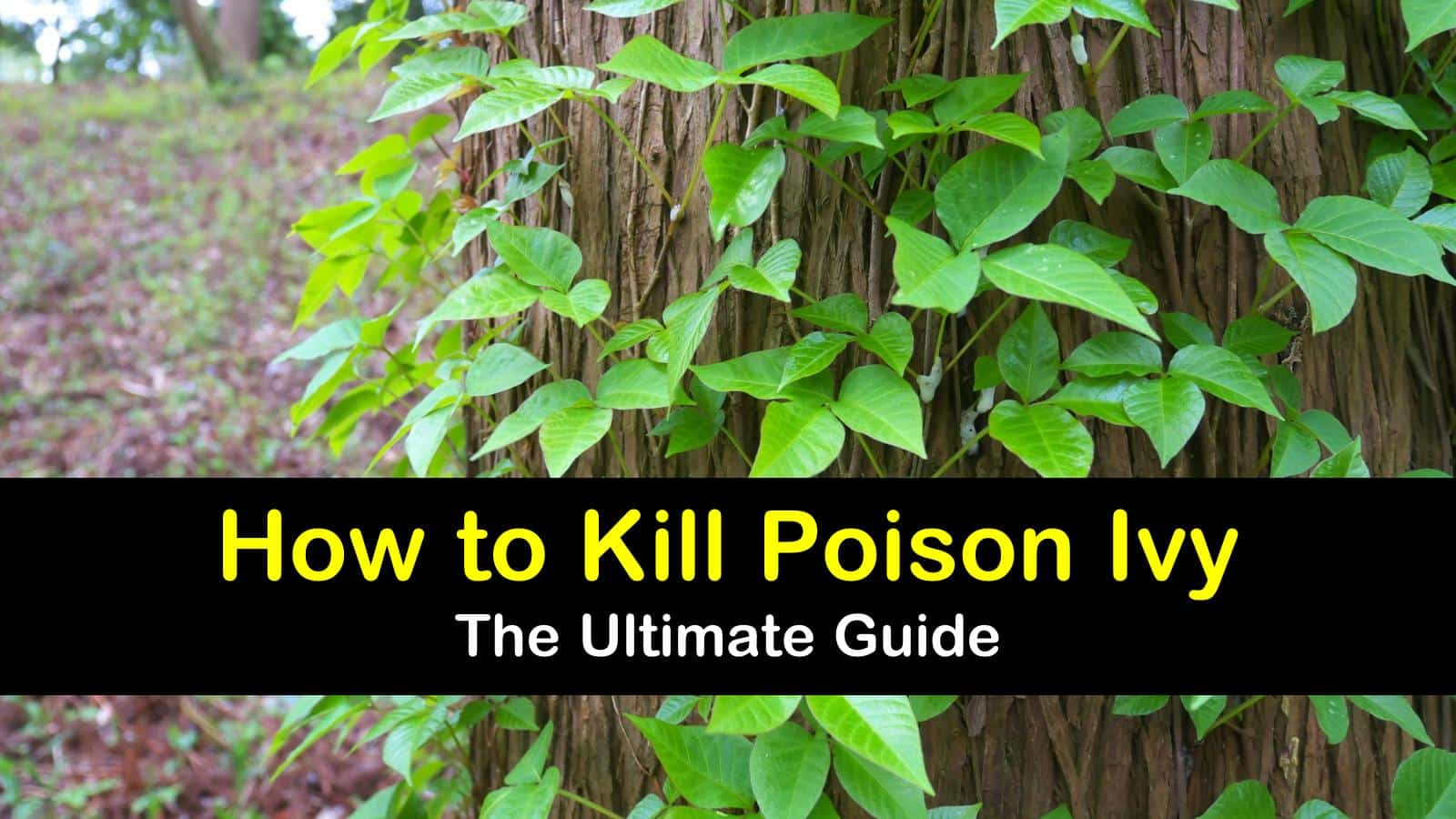 The Ultimate Guide To Kill Poison Ivy