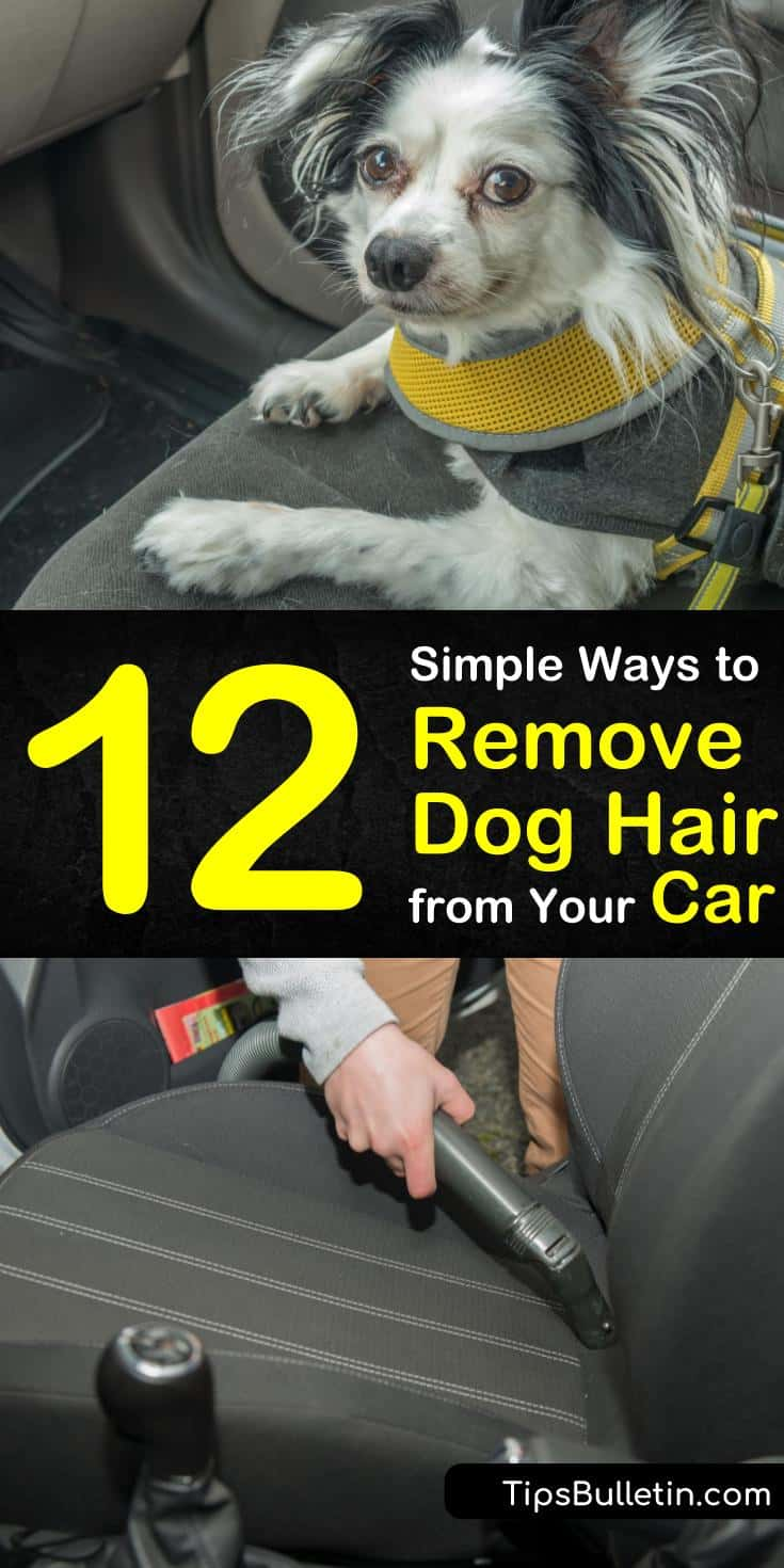 After a single ride in the car your dog's hair is all over the upholstery. You can vacuum the seats and carpets all you want, but that won't solve the problem. Let us show you how to tackle dog hair once and for all. #doghair #car #cleandoghair #removedoghair