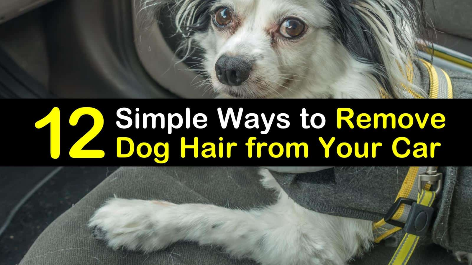 how to remove dog hair from car titleimg1