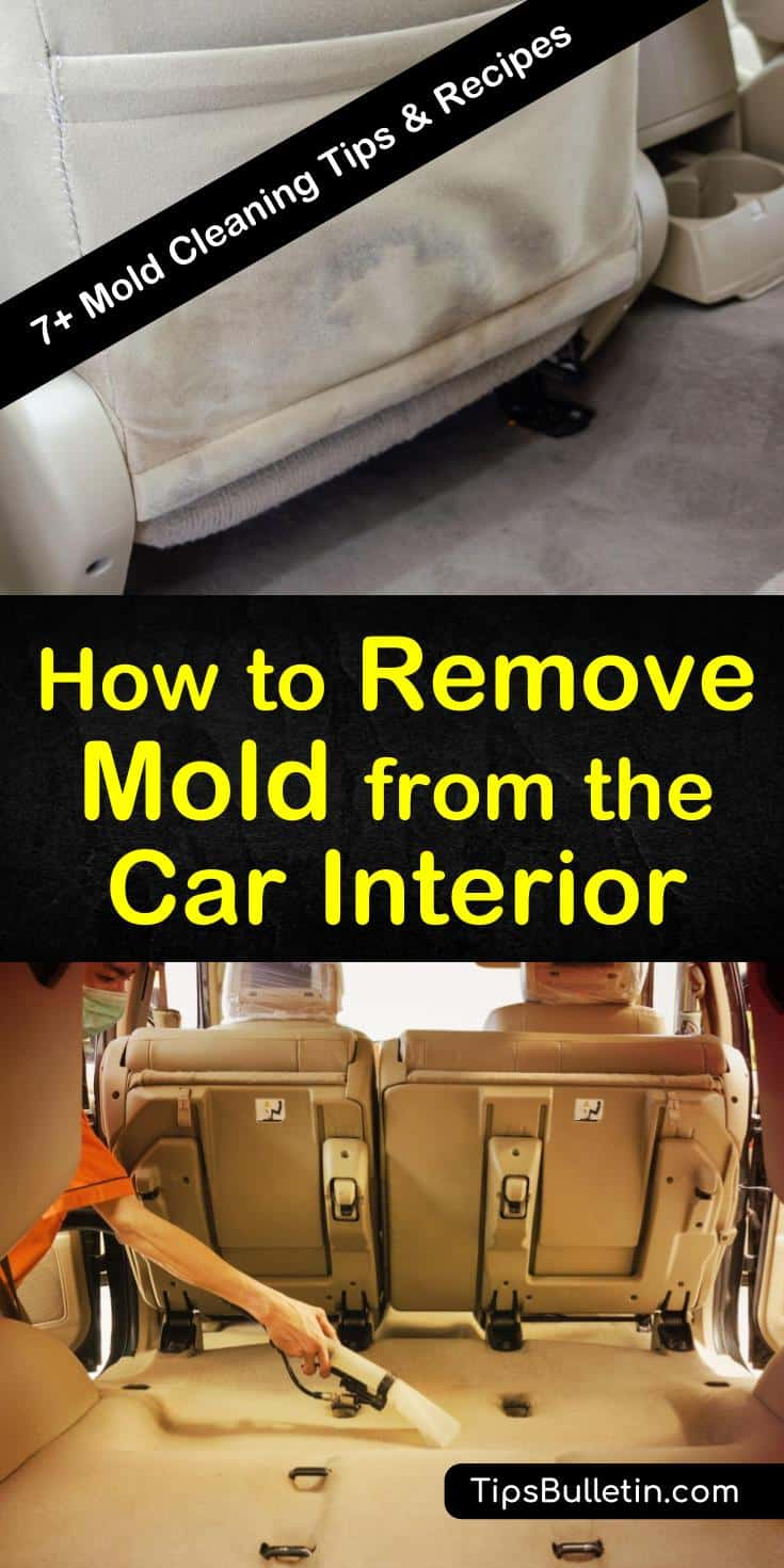Follow these easy tips for how to remove mold from the car interior on your own. Use cleaning products like baking soda, Borax, and ammonia to eliminate mold patches from carpet. Learn preventative methods you can take and identify warning signs for mold growth. #remove #mold #car #interior