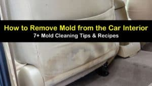 how to remove mold from the car interior titleimg1
