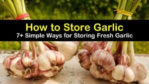 how to store garlic titleimg1