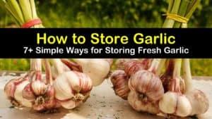 how to store garlic titleimg1