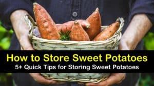 how to store sweet potatoes titleimg1