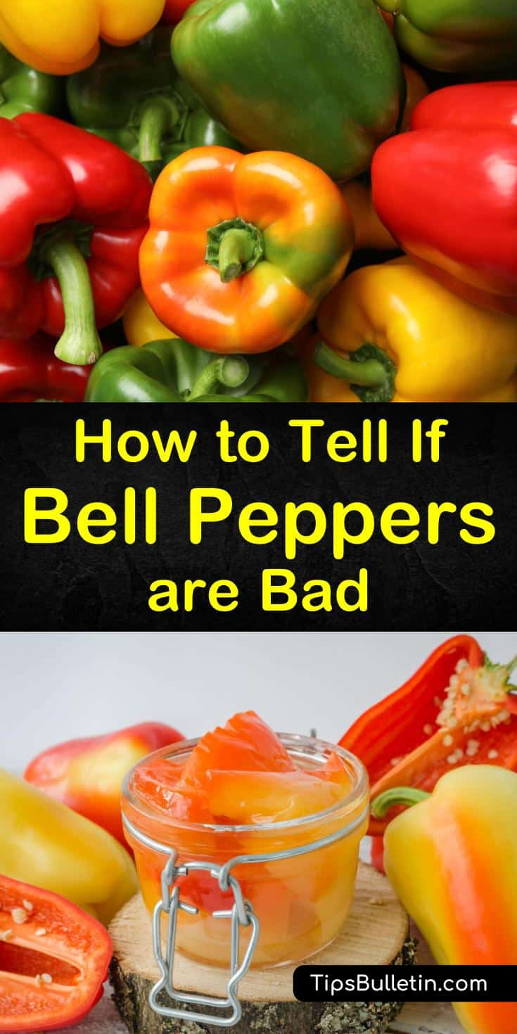 Discover how to tell if bell peppers are bad, and get tips on how to preserve them and prolong their shelf life. We show you how to spot spoiled and unripe green bell peppers and red bell peppers and much more. #bellpeppers #freshpeppers #badbellpeppers
