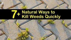 natural ways to kill weeds titleimg1
