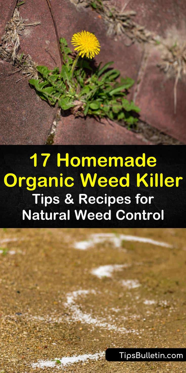 Create an organic weed killer recipe that won't kill grass or desirable plants. Natural herbicides kill weeds in yards and for vegetable garden. Use corn gluten meal for lawns to prevent weeds from returning. #organicgardening #organicweedkiller #killweedsnaturally
