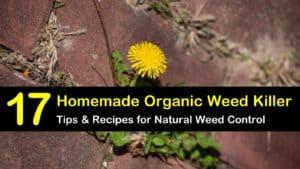 organic weed killer titleimg1
