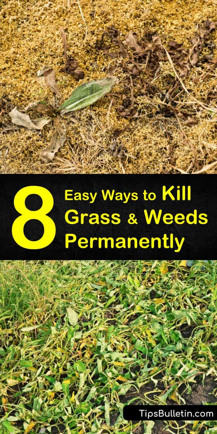 Discover what kills grass and weeds permanently using both organic and chemical weed control. Learn how to kill weeds without killing grass using a selective weed killer and careful application. Add mulch and pre emergents to prevent new weeds from growing. #kills #grass #weeds #permanently