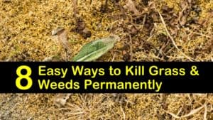 what kills grass and weeds permanently titleimg1