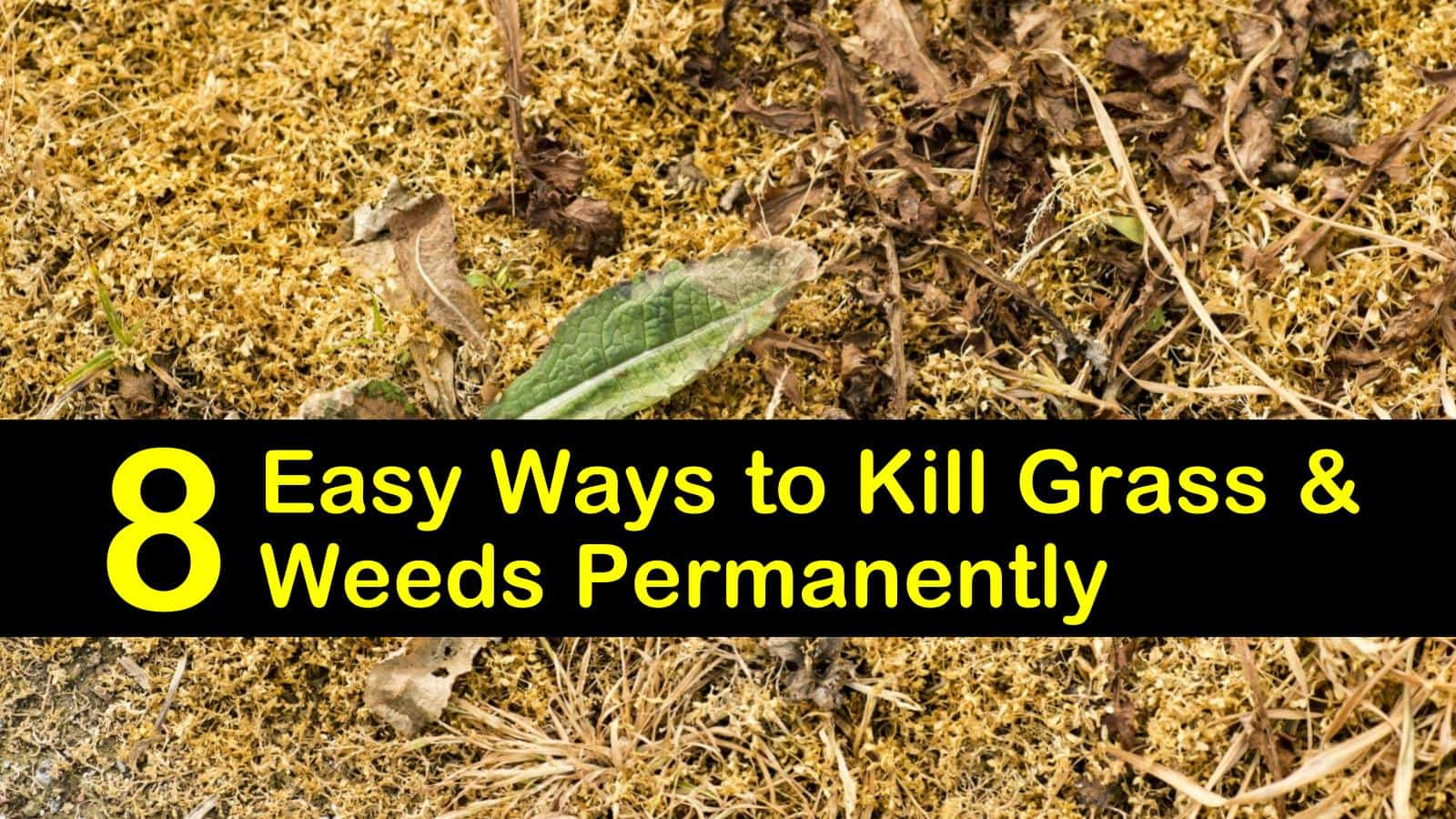 Kill Gr And Weeds Permanently