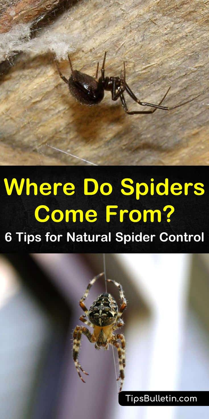 Where do spiders come from? This pest control guide shows you common entry points spiders use to make your home their own and how to get rid of them. With a great spider repellent recipe and tips for eliminating spider food sources, you'll soon be spider-free. #spiders #removespiders #spidercontrol