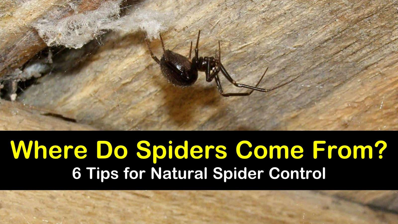 where do spiders come from titleimg1