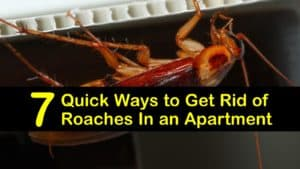 best way to get rid of roaches in an apartment titleimg1